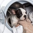 Stock Photo: Puppy inside washing machine
