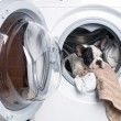 Puppy inside the washing machine — 图库照片