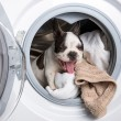 Puppy inside the washing machine — Stock Photo #26937225