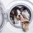 Puppy inside the washing machine — Stock Photo