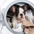 Puppy inside the washing machine — Stock Photo #26937357