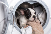 Puppy inside the washing machine — Foto Stock