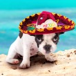 Puppy in Mexican sombrero on the beach — Stock Photo #27001939
