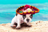 Puppy in Mexican sombrero on the beach — Foto Stock