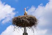čáp v hnízdě s ptáčat — Stock fotografie
