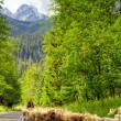 Flock of sheep in Tatra mountains — Stock Photo