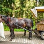 carrinhos de cavalo no Parque Nacional de tatra — Fotografia Stock  #27722871