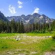 Beautiful scenery of Wlosienica meadow in Tatra mountain — Stock Photo