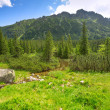 Beautiful scenery of Tatra mountains — Stock Photo