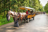 Horse carts in Tatra National Park — Stock Photo