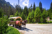 A coach with horses in Tatra National Park — Stock Photo