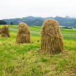 Haystacks on the field in Zakopane — Stock Photo #28498331
