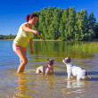 Woman throwing stick for two french bulldogs — Stock Photo #31196925