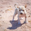 Stock Photo: Homeless puppy on beach