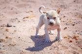 Homeless puppy on the beach — Stock Photo