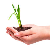 Young plant in hands — Stock Photo