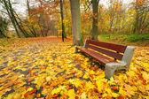 осенняя аллея в парке — Стоковое фото