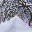 Winter alley in snowy park of Gdansk — Stock Photo #37389315