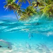 Stock Photo: Tropical fishes in CaribbeSea