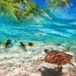 Stock Photo: Green turtle swimming at tropical island