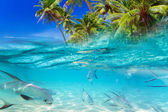 Tropical fishes in Caribbean Sea — Stock Photo