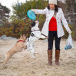 French bulldogs with a frisbee — Stock Photo #37391463