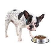 French bulldog with his bowl — Zdjęcie stockowe