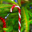Traditional candy cane on christmas tree — Stok fotoğraf
