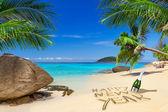 Nouvelles célébrations heureuses de l'année en zone tropicale — Photo