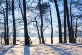 Winter scenery of forest at the lake — Stock Photo