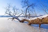 Winter scenery of frozen lake — Stock Photo