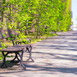 Beautiful alley with empty bench in the park — Stock Photo #45916705