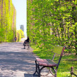 Beautiful alley with empty bench in the park — Stock Photo #45916881