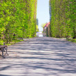 Beautiful alley with empty bench in the park — Stock Photo #45916999
