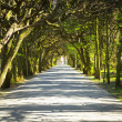 Beautiful alley in the park — Stock Photo #45917663