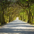 Beautiful alley in the park — Stock Photo #45917677