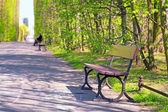 Beautiful alley with empty bench in the park — Stock Photo
