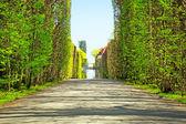 公園の美しい路地 — ストック写真