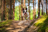 French bulldog in the forest — Stock Photo