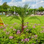 Small palm tree in the gardens at the Sopot Molo — Stockfoto