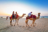 Camel ride on the beach at Dubai Marina — Stock Photo