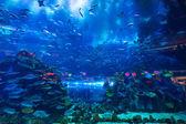 Huge Oceanarium inside Dubai Mall. — Stock Photo