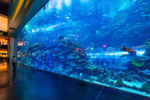 Huge Oceanarium inside Dubai Mall. — 图库照片