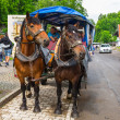 Horse-drawn carriage at the Neuschwanstein Castle — Stock Photo #50166637