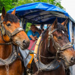 Horse-drawn carriage at the Neuschwanstein Castle — Stock Photo #50166677