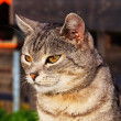 Cats look — Stockfoto