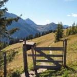 Trail dans les Alpes — Photo