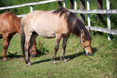 Horses in the meadow — Stock Photo