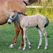 Stock Photo: Mare and her foal