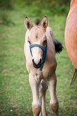 Mare and her foal — Fotografia Stock